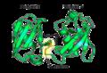 Diubiquitin-lysine-48.png