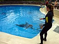 Dolphin Training (7980945216).jpg