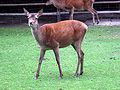 Dortmund-Zoo-IMG 5495-a.jpg