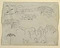 Drawing, Studies of Birds and Trees seen from the Rio Magdalena, Colombia, 1853 (CH 18193839).jpg