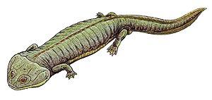 Dvinosauria - Dvinosaurus primus