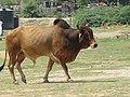Dwaraka and around - during Dwaraka DWARASPDB 2015 (156).jpg