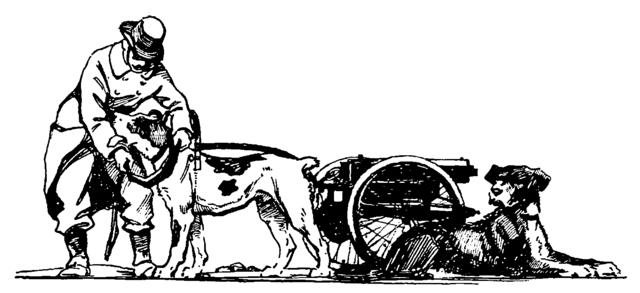 Filedyer Pierrot Chien De Belgique Trad Mathot 1916