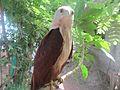 Eagle Kottayam.jpg