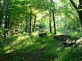 Early morning - Kingsland Wood. Nr. St Hilary. - geograph.org.uk - 915349.jpg