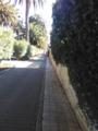 El Camino largo4.png