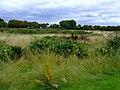 Elthorne Park - geograph.org.uk - 2585947.jpg