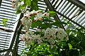 Espèces tropicales-Jardin des plantes de Nantes (13).jpg