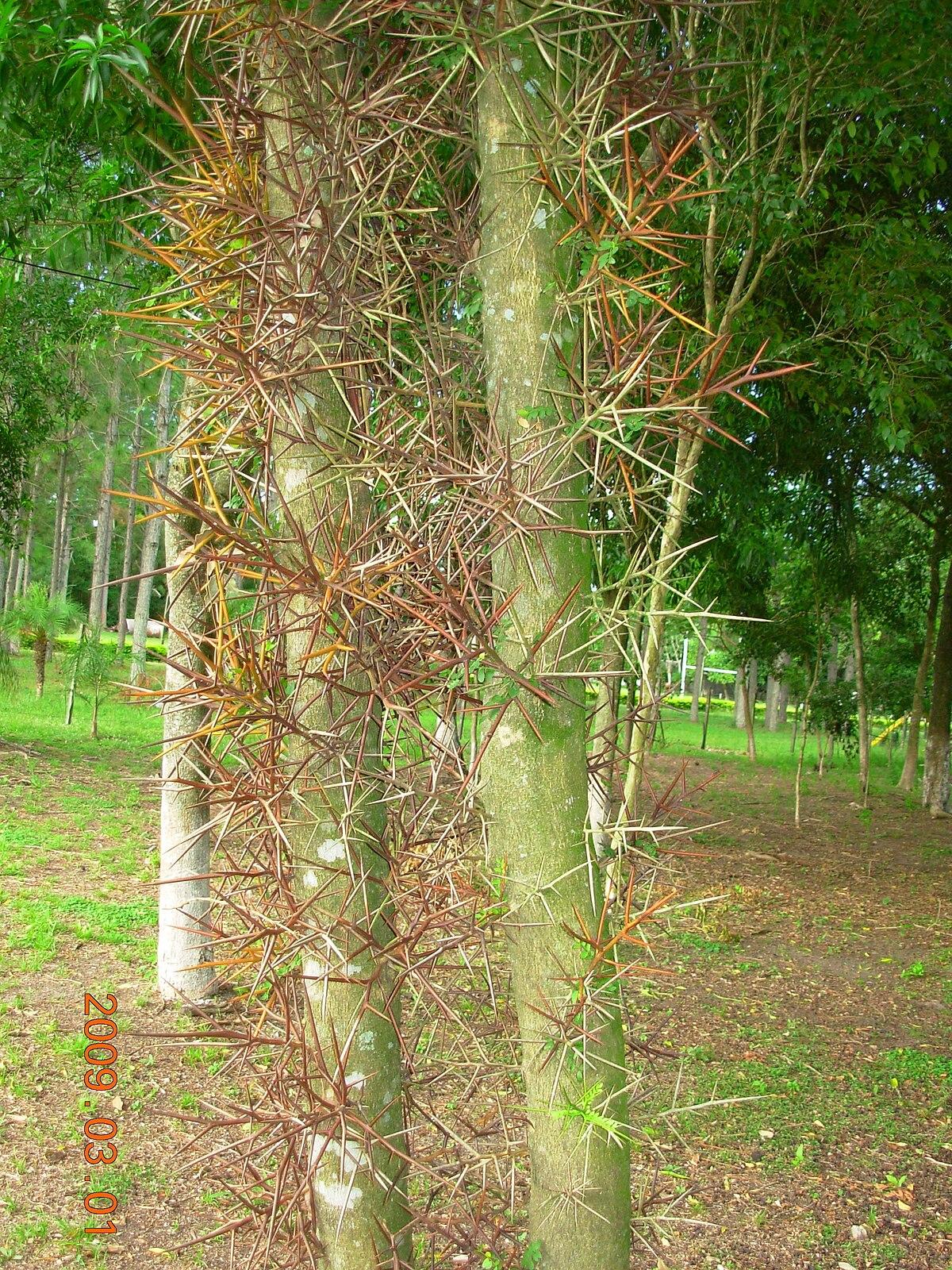 De su selva los cacheros - 2 10
