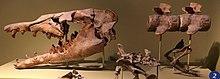 FMNH Basilosaurus.jpg
