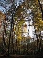 Faget forest (3042614407).jpg