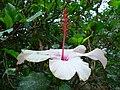 Fale - Giardini Botanici Hanbury in Ventimiglia - 539.jpg