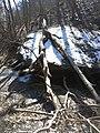 Fall Run Park in Shaler Township, late winter - 29.jpeg