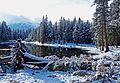 Fallen, Tioga Lake, Yosemite 5-20-15 (17661636663).jpg