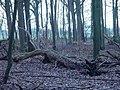 Fallen tree 29-1-2012 - panoramio.jpg