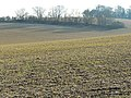 Farmland and trees, near New Alresford - geograph.org.uk - 697564.jpg