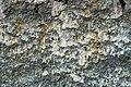 Fault slickenside (Great Smoky Mountains, Tennessee-North Carolina, USA) 2.jpg