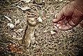 Fearless Critter (2256194432).jpg
