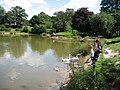 Feeding the Swans, Princes Park Lake - geograph.org.uk - 522219.jpg