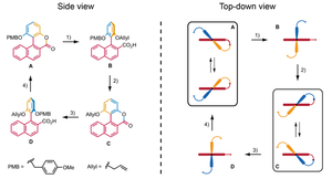 Synthetic molecular motor - The chemically driven rotary molecular motor by Feringa and co-workers.