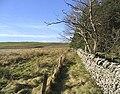Field-woodland boundary - geograph.org.uk - 340909.jpg