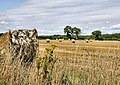 Fields East of Sowley Lane - geograph.org.uk - 1431841.jpg