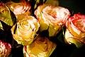 Flaming Roses (3839206553).jpg