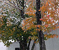 Flickr - Nicholas T - October Snow (3).jpg