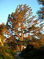 Flickr - brewbooks - Tree at Sunrise.jpg