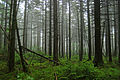 Flickr - ggallice - Highland forest, Cranberry Wilderness.jpg