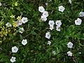 FloraRome (4).JPG