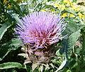 Floraison mauve.JPG