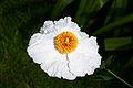 Flower, Dunster Castle Gardens, Somerset (3821539382).jpg