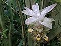 Flower20171002 085102.jpg