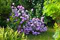 Flower 6294.jpg