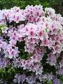 Flower spring Japan.jpg