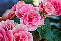 Flowers (157722107).jpeg