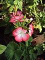 Flowers - Uncategorised Garden plants 133.JPG