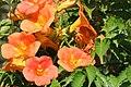 Flowers 1 (166468501).jpeg