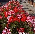 Flowers in Sutton High Street, SUTTON, Surrey, Greater London (2) - Flickr - tonymonblat.jpg