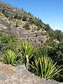 Fogo-Parc forestier de Monte Velha-Sentier (5).JPG