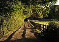 Footpath along driveway, Burley - geograph.org.uk - 1545389.jpg
