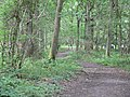 Footpath through the forest - geograph.org.uk - 496005.jpg