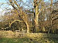 Footpath to Thornley Gate through the Faerie Glen - geograph.org.uk - 680666.jpg