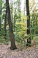 Forest-park - panoramio.jpg