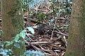 ForestWallaby.jpg