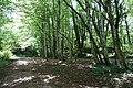 Forest @ Roc de Chère @ Talloires (34836775393).jpg