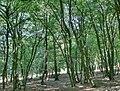 Forest - panoramio - paulnasca (70).jpg