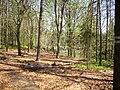 Forest in the Czech republic.jpg