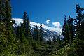 Forest shelf at Bug Lake (6441611529).jpg